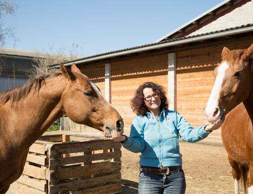 Auch Pferde lieben Hanf
